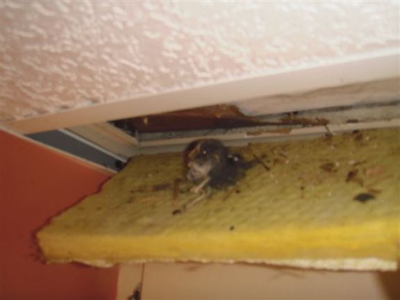 Chatham Home Inspectors Sample Interior Deficiencies