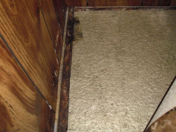 Evidence of leakage, mold and rot on carpet nailing strip in basement.