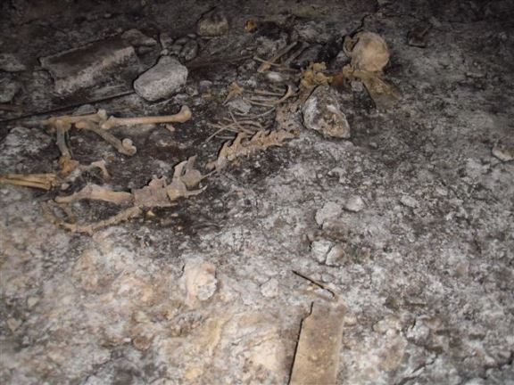 Skeletal remains are a common sight in crawl spaces.
